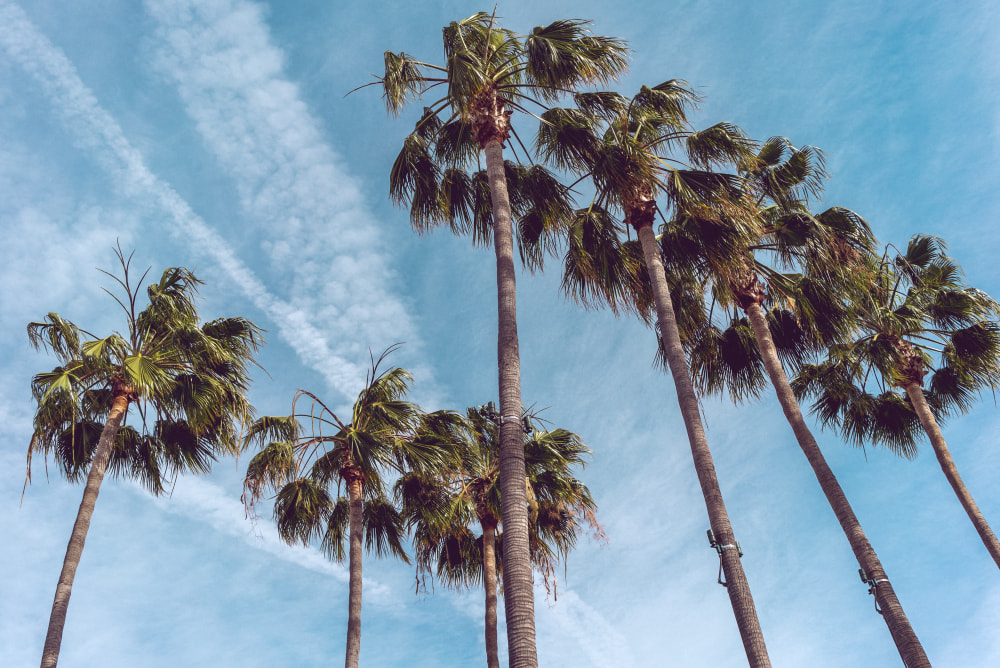 Los Angeles International Airport Transfers